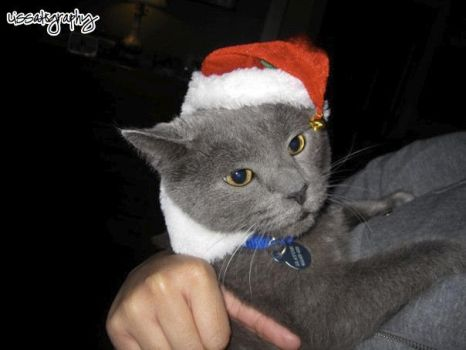 ChristmasCat by lissatography