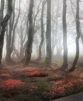 Magic forest- stock by Consuelo-Parra