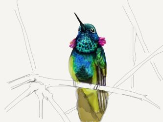Hummingbird6 by ceredwyn