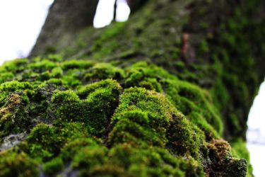 Moss by MidoriEnvy