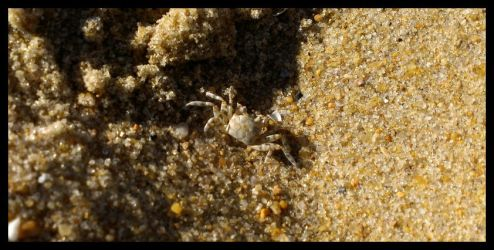 Tiny Crab by Sapphire2kG