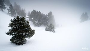 Ski touring  in mist by rdalpes