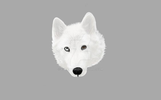 First Realistic Wolf Art EVER by EveliWolf