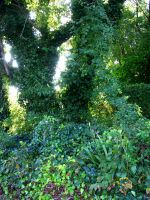 Background covered in Ivy 3 by FairieGoodMother