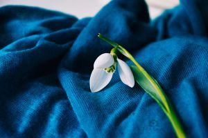 Snowdrop in blue by Focus-On-Me-Photo