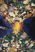 Typical Autumn Shot by doctor-surgeon