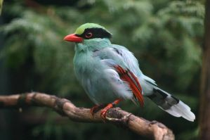 Green Magpie by Topasdragon