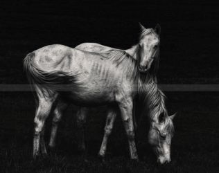 Wild Horses by HeatherWaller-Rivet
