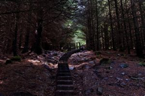 undiscovered paths, 1 by artspring