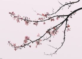 Cherry Blossom by Bumblewales