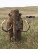 Last Mammoths:Wrangel Island by Leogon