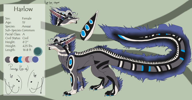Harlow Dragon Form Reference Sheet by scamper696