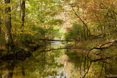 Fall at Turtle Creek by creightonpics