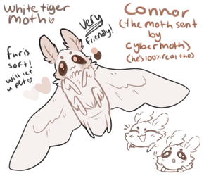 Connor the moth by stariitea