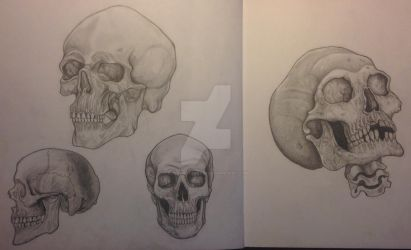 Skull drawings by OscarpotterArt