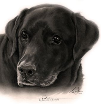 Commission - Black Labrador (William) by Captured-In-Pencil
