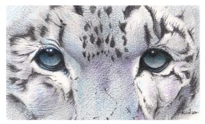 Snow Leopard. A Super Close Up by Alvin-and-the-wild
