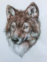 Wolf Portrait by Saanny