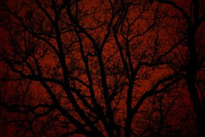 bloody tree by CatchMePictures