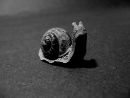 snail by agnese9