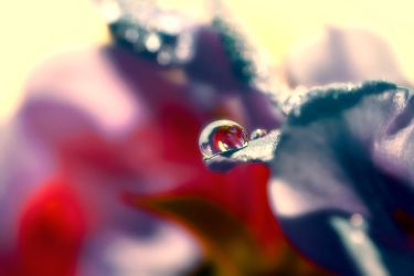 Captured Beauty - Liquidia by tigaer