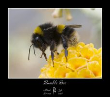 Bumble Bee by BFG
