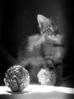 Kitten with silver balls by dimichael