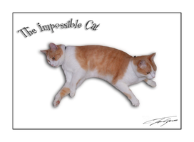 the impossible cat by electricjonny