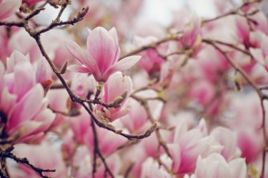As pink as it gets I by OliverBPhotography