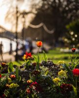 Afternoon Bokeh! by Mincingyoda