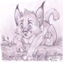 Young Caracal by Fakelore