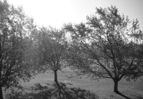 Trees in the sun by gothickitty06