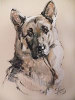 german shepard by bull-terrier