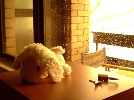Puppy in the Storm by solargeometry