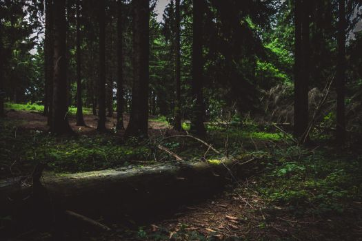 Brander Wald - 1 by chickow