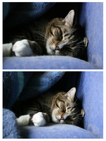a cats life 17 by xwannabex