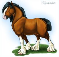 Clydesdale by taa