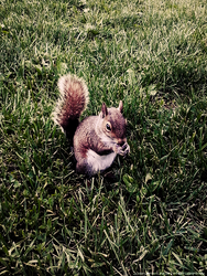 Squirrel eating by paintingscars