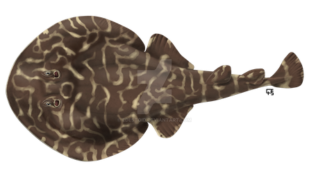 Vermiculate electric ray by Edestoid