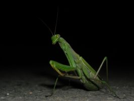 Mantis by s3xyyy