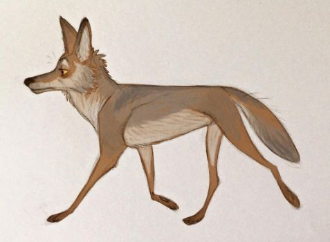 Coyote by purpl8ze