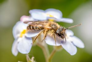 tiny bee by MarcosRodriguez
