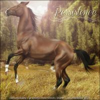 Persistence by VIP-EquineArt