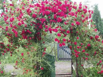 Gate of Roses by morkalavin