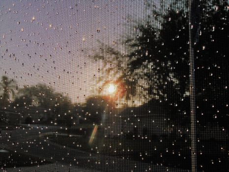 Sunrise thru the dew drops on the porch screen by knighttemplar1