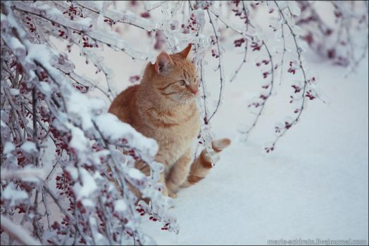 icy winter 002. by LinAt