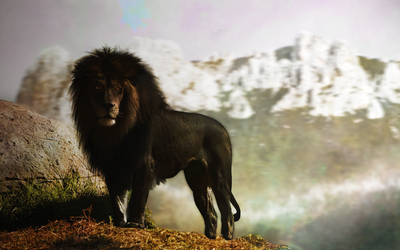 Black Lion by pavoldvorsky