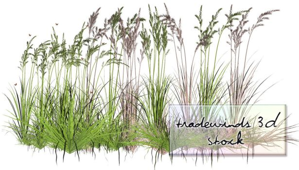 TW3D Summer Grass by TW3DSTOCK