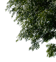 tree corner 1 png by gd08