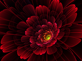 Red Camellia by Flockling